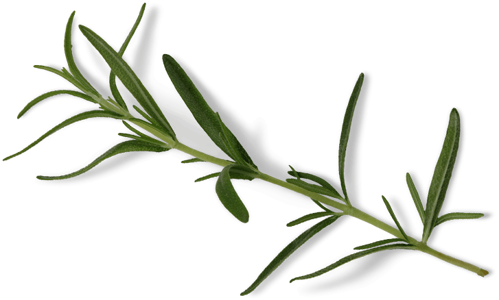 CBD Global Rosemary Plant Mobile