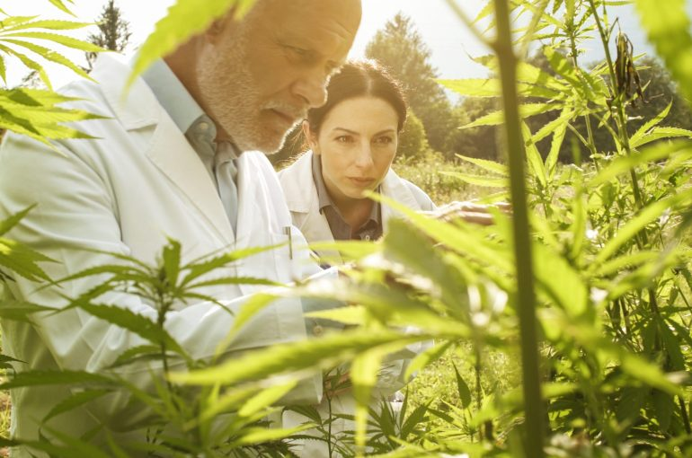 Debunking 4 Misconceptions About CBD